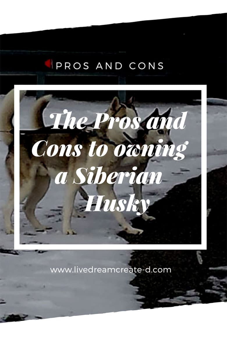 PROS AND CONS OF OWNING A SIBERIAN HUSKY