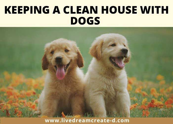 Keeping a clean house with dogs.